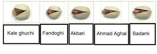 all pistachio type